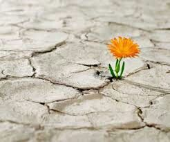 Hope,hoped,hoping- Esperanza