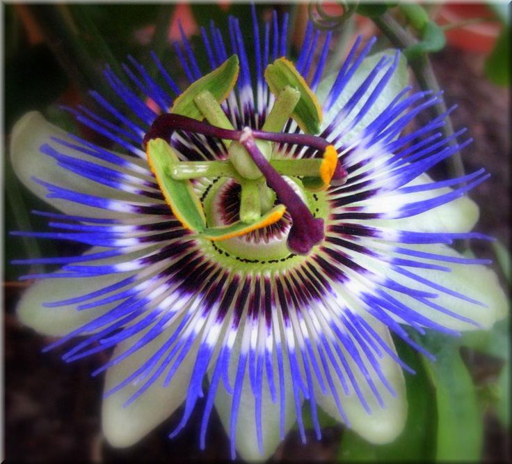 31 best PLANTAS images on Pinterest Environment, Flower and Form of