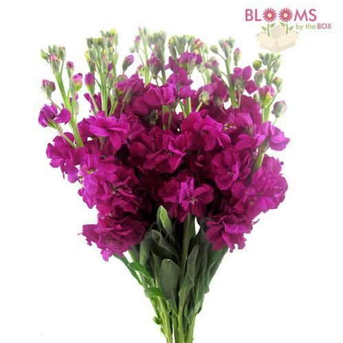 Stock Deep Pink / Fuschia. These are pretty too! $25.87/bunch 10 stems