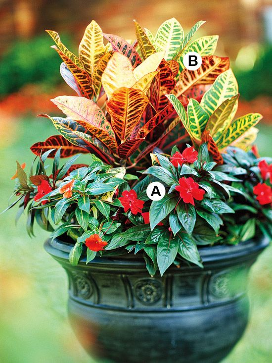 A. New Guinea impatiens (Impatiens 'Sonic Red') -- 4   B. Croton (Codiaeum variegatum 'Petra') -- 1: Container Gardens, Ideas, Sonic Red, Touch, Color, Croton Codiaeum, Add, Ext Plants Planters Flowers, Container Gardening Flowers