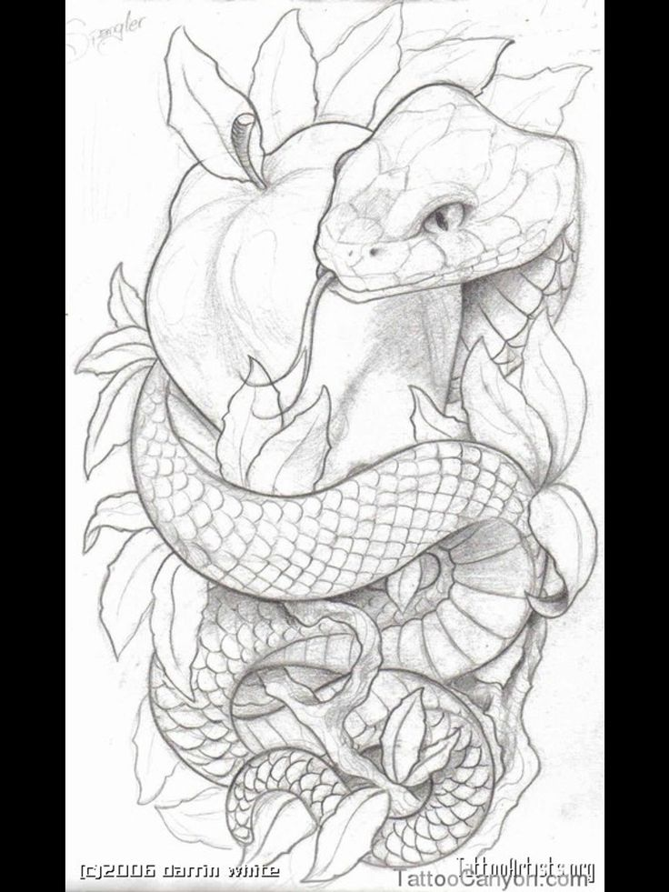 Snake Tattoo Line Drawing : Best snake tattoo sketches images on pinterest design