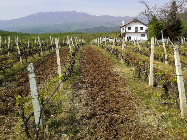 Lousis Vineyards, Polla Nera | Naoussa
