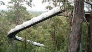tassie slide in forrest