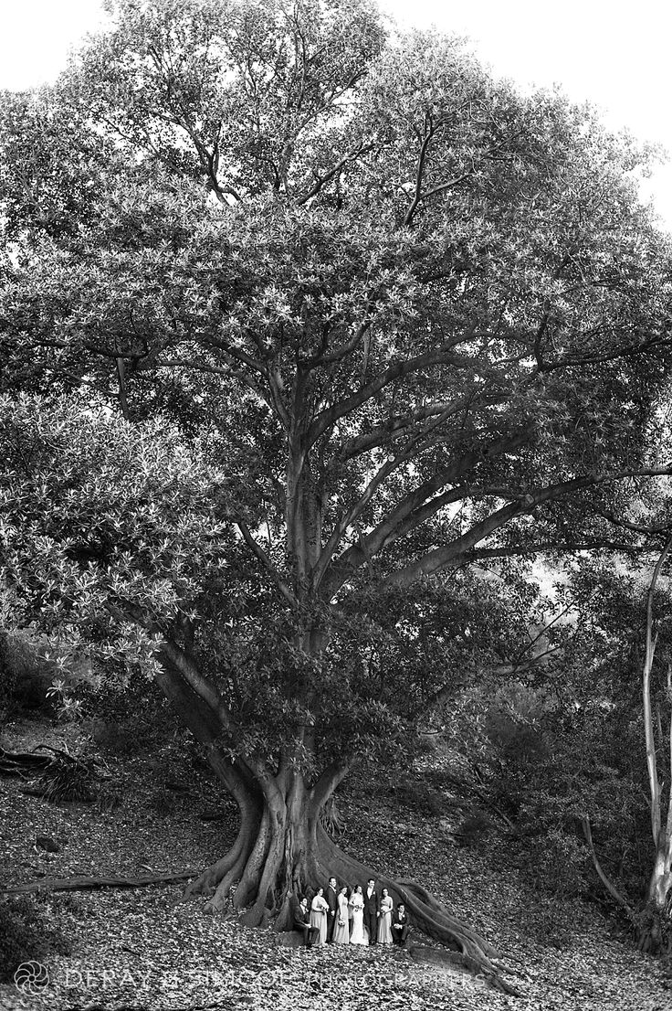 100+ year old tree, how we love thee. Black and white bridal party photos
