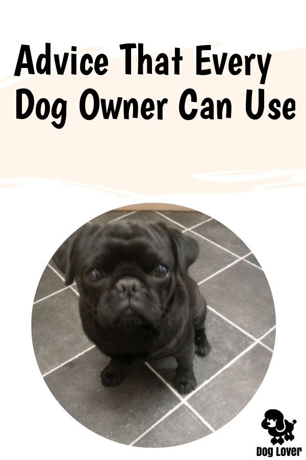 Want Good Ideas About Pets Appear Here Click Image To Read More Details Lowmaintenancedogbreeds