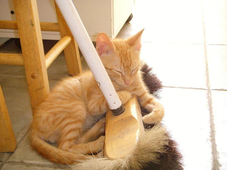 """Aha!-bezoekster Annemie stuurde ons via het Aha!-vragenformulier de volgende vraag: Hoe kan je urinevlekken van een poes uit een vloer verwijderen? Een """"ongelukje"""" komt ook voor bij jefavoriete huisdier. Maar urine van katten en honden kan een hardnekkige geur achterlaten. Zo ga je best te werk! Deppen maar! Probeer zo veel mogelijk van de urine … Continued"""