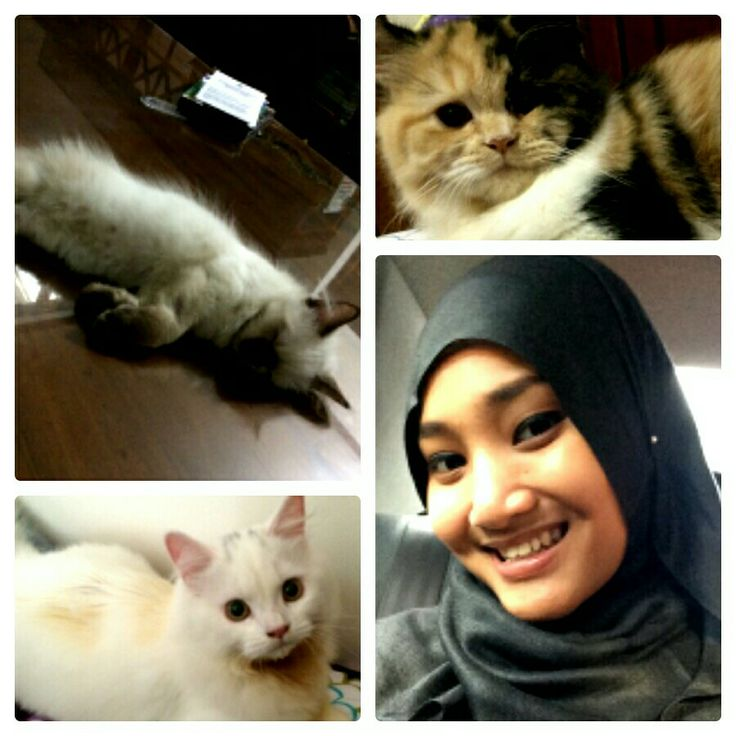 @FatinSL with the cats