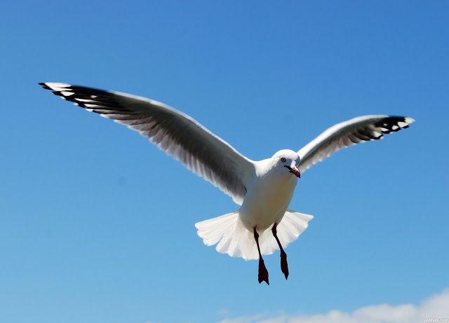 Fui assaltada por uma gaivota! http://palavrasdoabismo.blogspot.pt/2017/02/fui-assaltada-por-uma-gaivota.html #roubo #crime #pássaros #birds #comida