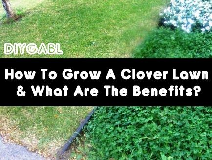 How To Grow A Clover Lawn & What Are The Benefits - DIY Gardening & Better Living