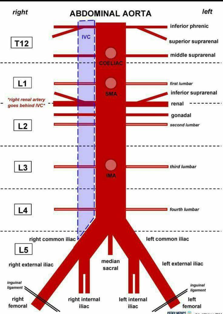 Mejores 53 imágenes de anatomy en Pinterest   La escuela de medicina ...