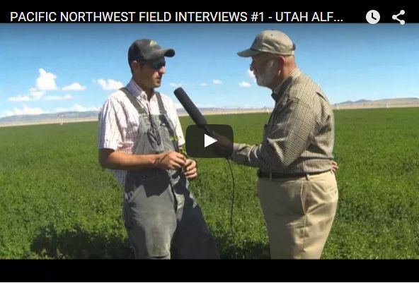 """This week TPSL will feature a video everyday from """"The 2015 Pacific Northwest Field Interviews,"""" hosted by Stu Ellis. First in the series is a video revealing how Texas Plant and Soil Lab recovered Alfalfa in Utah after a hail storm. To see the video, click below: http://www.texasplantandsoillab.com/lab-testing/?p=1330 #tpsl #ag #cornbelt #lab #agriculture #AgTech #Agronomics #BioTech #Farm #Farming #Farmers #Alfalfa"""
