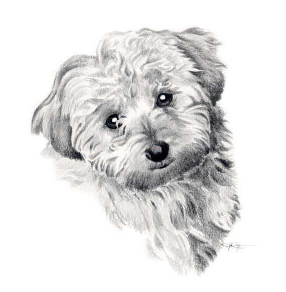COCKAPOO Dog Art Print Signed by Artist DJ Rogers by k9artgallery
