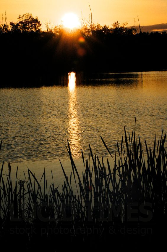 Spring sun sets behind southern treeline of Buttertubs Marsh, Nanaimo