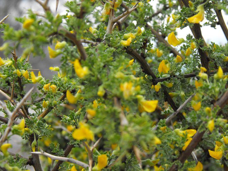 Aires de primavera en el Valle del Aconcagua