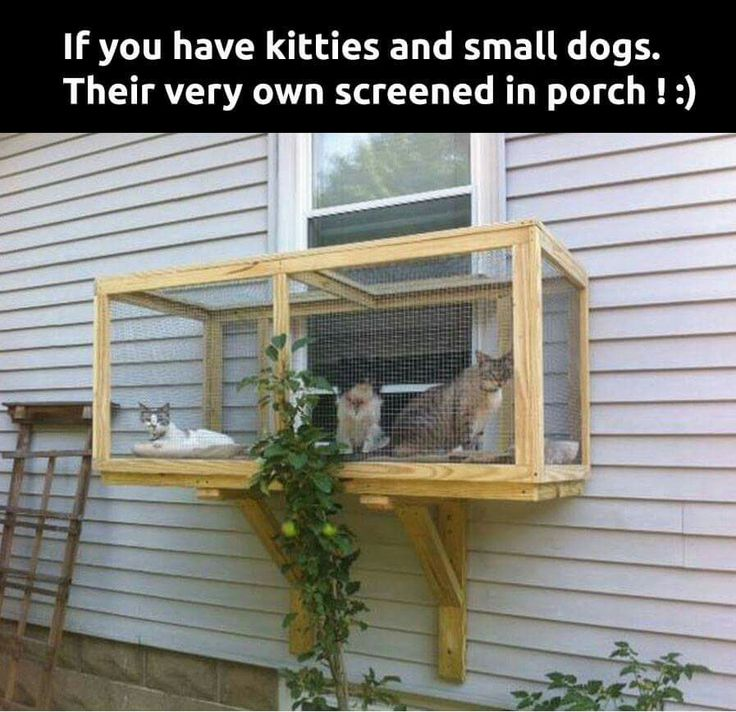 This would be cool, as an outdoor litter box idea, no mess to sweep and it's not in the way.