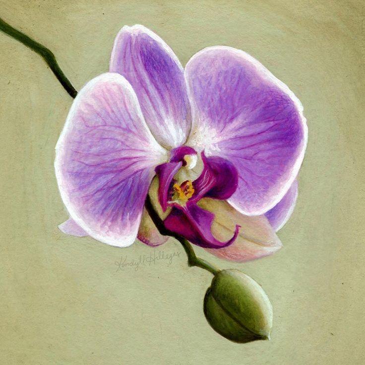 рисунки красивых орхидей ищете себе