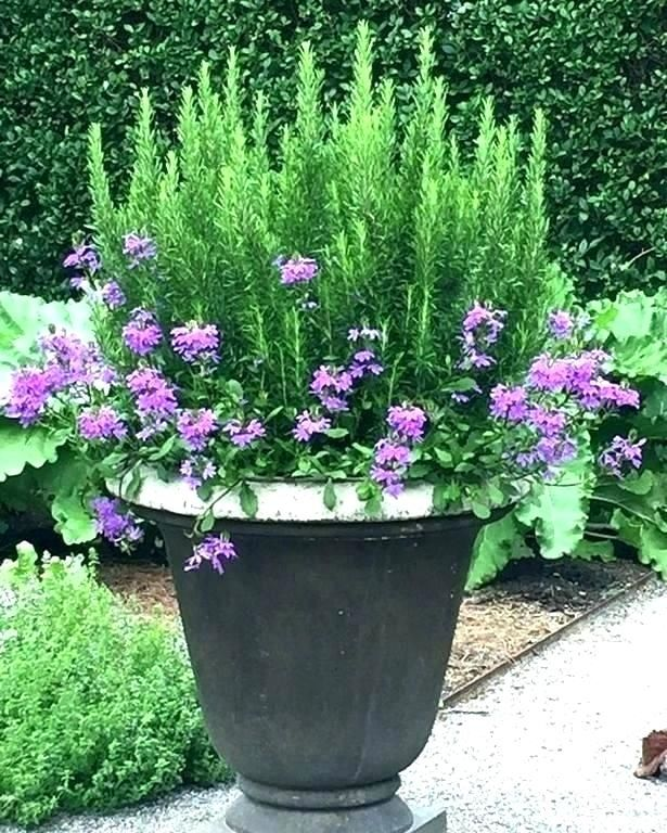 Container Planting Ideas Uk Google Search Plants Container Gardening Potted Plants Outdoor