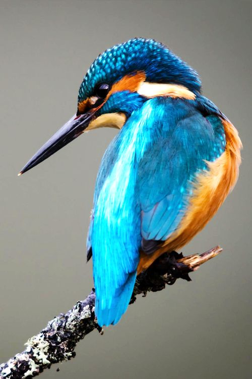 king fisher                                                                                                                                                                                 More