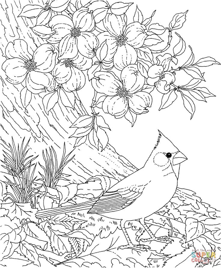 Cardinal Bird and Flowering Virginia State Flower coloring page ...