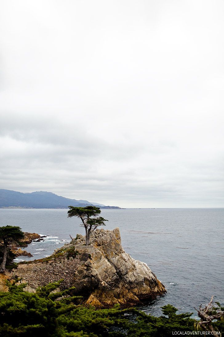 The Lone Cypress Pebble Beach California (+ Photo Guide to the World-renowned 17 Mile Drive) // localadventurer.com