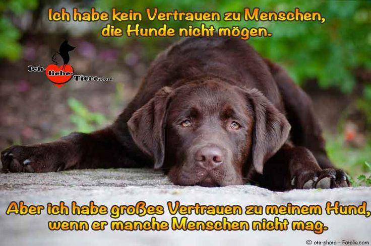 Ich habe kein Vertrauen zu Menschen, die Hunde nicht mögen. Aber ich habe großes Vertrauen zu meinem Hund, wenn er manche Menschen nicht mag.