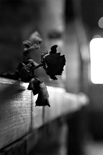 """"""" No soy de los que exprimen su corazón en un lugar violento. Soy de los que atestiguan la belleza y la muerte de la rosa.... """"   Rosario Castellanos (Poeta Mexicana)"""