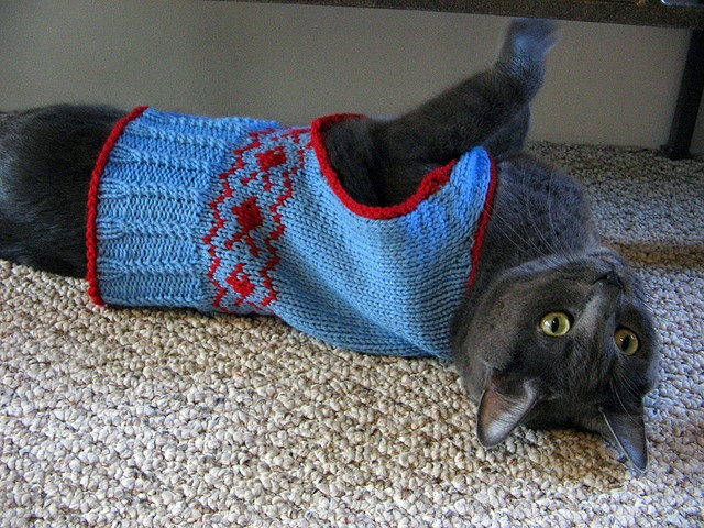 Pet Knitting Patterns : 17 best images about Free Knitting Patterns (Pets) on Pinterest Free patter...