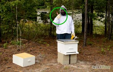 How to Buy Honey Bees: 12 Steps - wikiHow