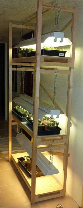 Vegetable Stand Ideas Growing Indoor