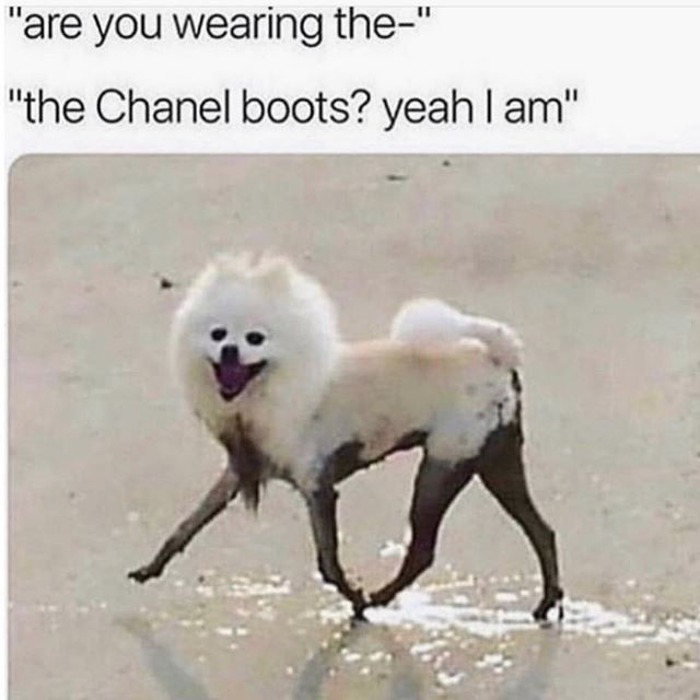 Style Advice For Short Men Feat The Modest Man Style Girlfriend Funny Dog Memes Funny Animal Memes Animal Memes