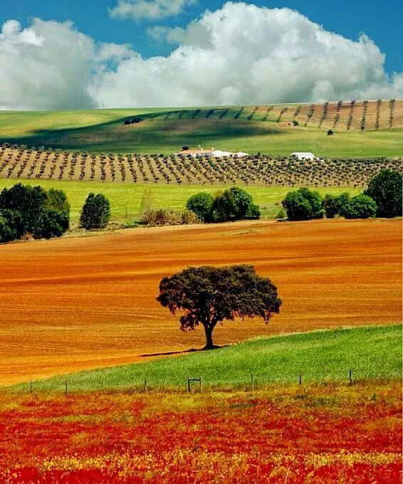 Alentejo, nature, architecture and for wine lovers!
