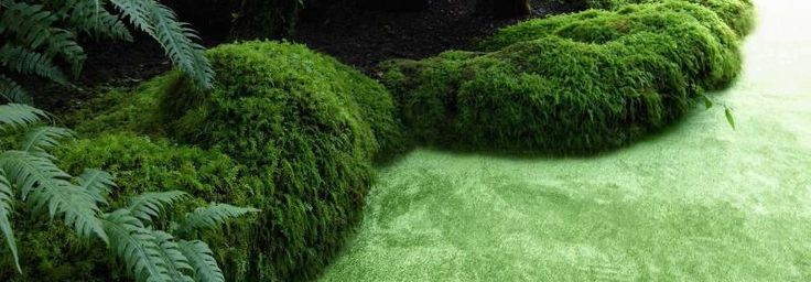 Zelený bytový koberec s hedvábným leskem / Silky green residential carpet, Boca Praha http://www.bocapraha.cz/cs/produkt/134/silky-seal-1200-/