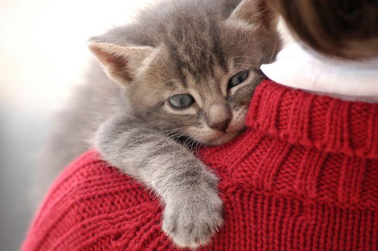 10 tegn på, at din kat virkelig elsker dig