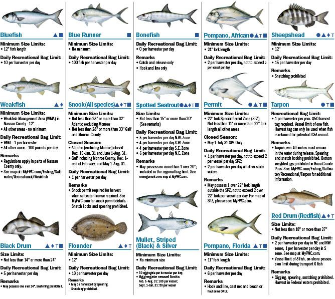 Coastal species 2016 florida saltwater fishing for South carolina saltwater fishing regulations