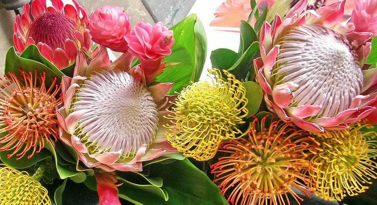 Tropical Flowers from Maui Hawaii - Have a Nice Day