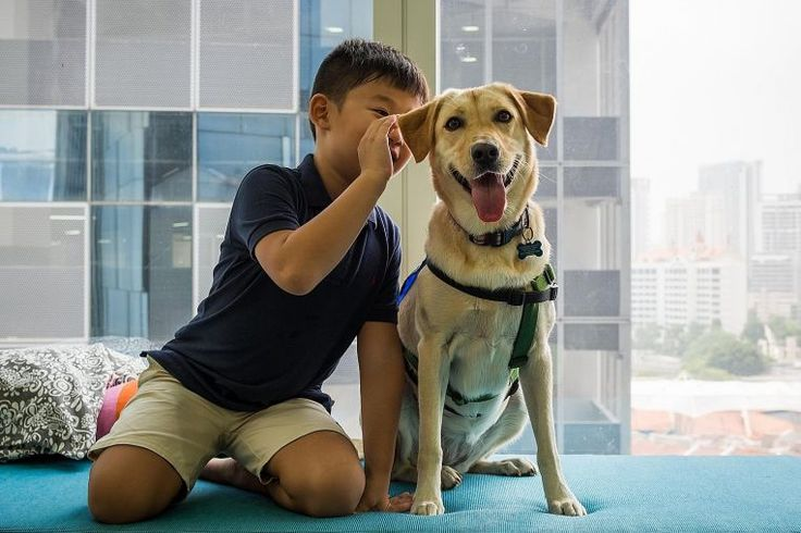 Magic of an animal's touch - Pets make us happy and can help to reduce our stress and anxiety.