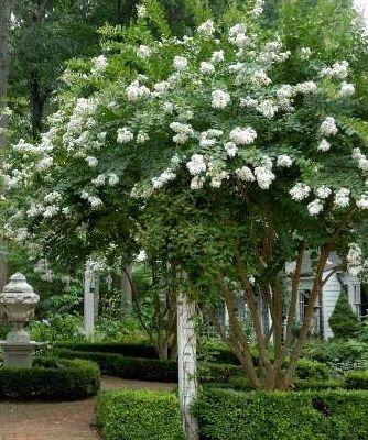 Stamma upp gamla syrener och andra träd och buskar så blir det siktlinjer och plats för mer undertill.