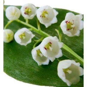 Lily Valley Fresh White Flower