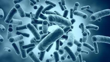 В организме взрослого человека в среднем проживает в десять раз больше бактерий, чем наших собственных клеток. Фактически бактерии формируют в нашем теле полноценный орган.