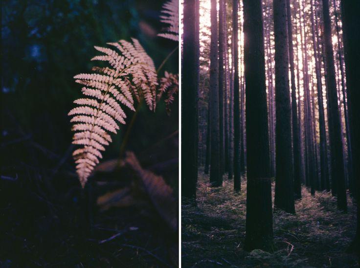 The woods in Vallombrosa, Tuscany, Italy - FILM • ANALOG - © Lucrezia Cosso