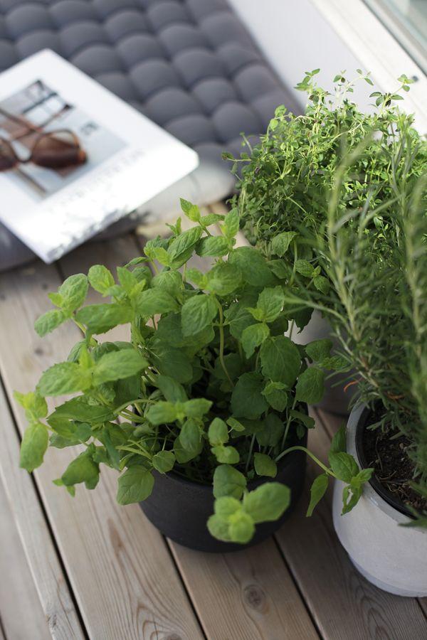 Outdoors, herbs. Photo © Elisabeth Heier