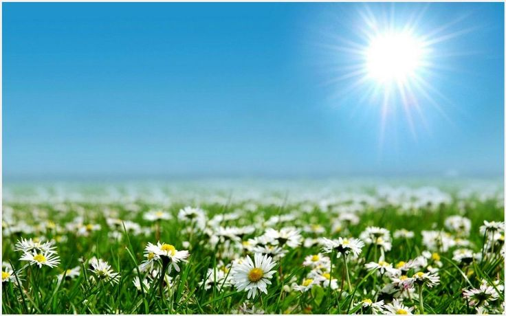 White Flowers Sun And Sky Wallpaper | white flowers sun and sky wallpaper 1080p, white flowers sun and sky wallpaper desktop, white flowers sun and sky wallpaper hd, white flowers sun and sky wallpaper iphone