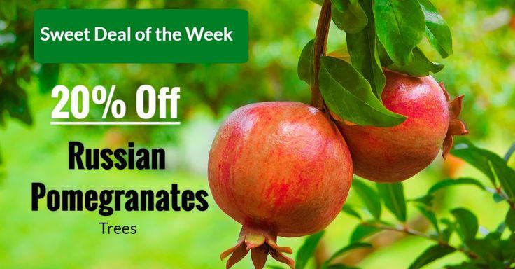 https://www.isons.com/wp-content/uploads/2017/01/Russian-Pomegrante-20-Off.jpg