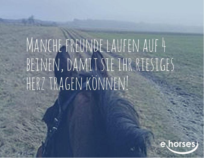 Unsere lieben Pferde! Was würden wir ohne sie machen? Finde dein Traumpferd auf www.ehorses.de