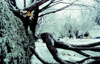 1998: Ice storm in eastern Ontario