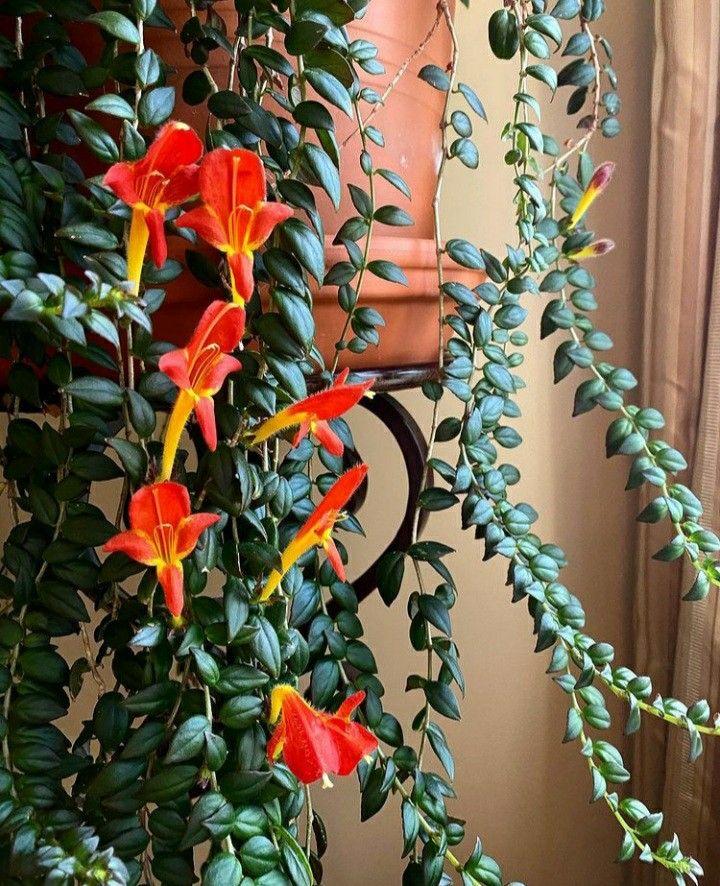 Pin On Best Indoor Plants
