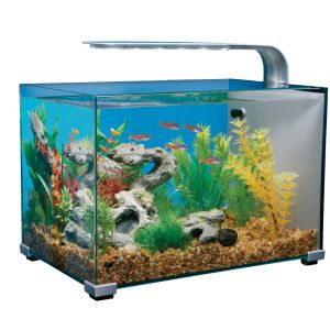 Top fin 5 gallon glass aquarium aquariums petsmart for Petsmart fish filters