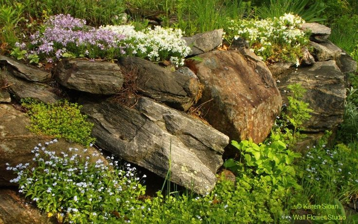 Rock garden in May