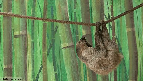 Monkey Steals Food from Sloth | Gif Finder – Find and Share funny animated gifs