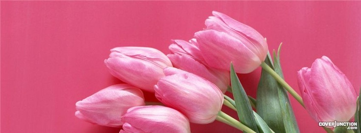 tulips Facebook Cover - CoverJunction